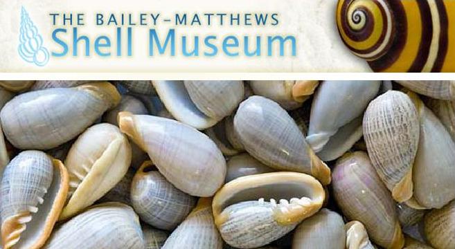 Bailey-Matthews-Shell-Museum