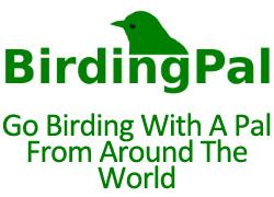 Birding Pal, Sanibel, Florida